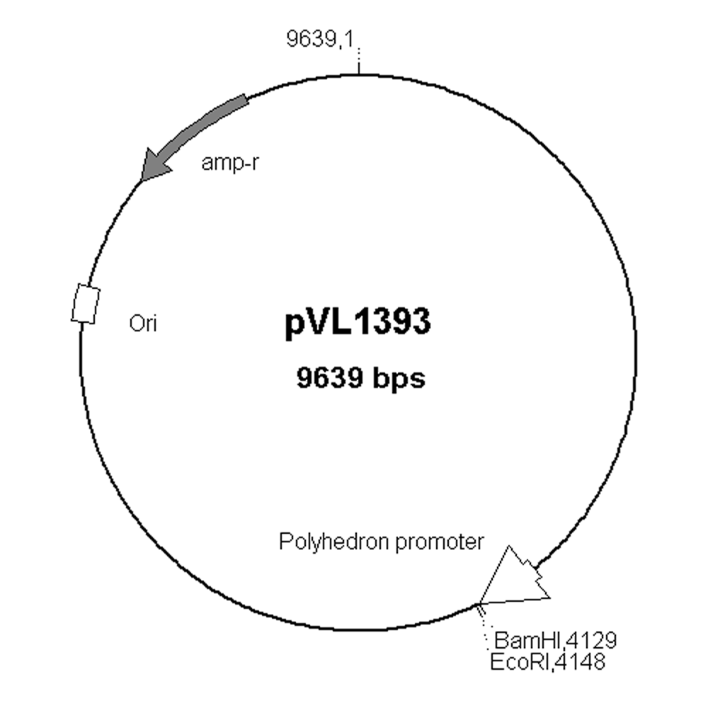 Phrm 302 Intro To Molecular Biology Spring 2012 Handout
