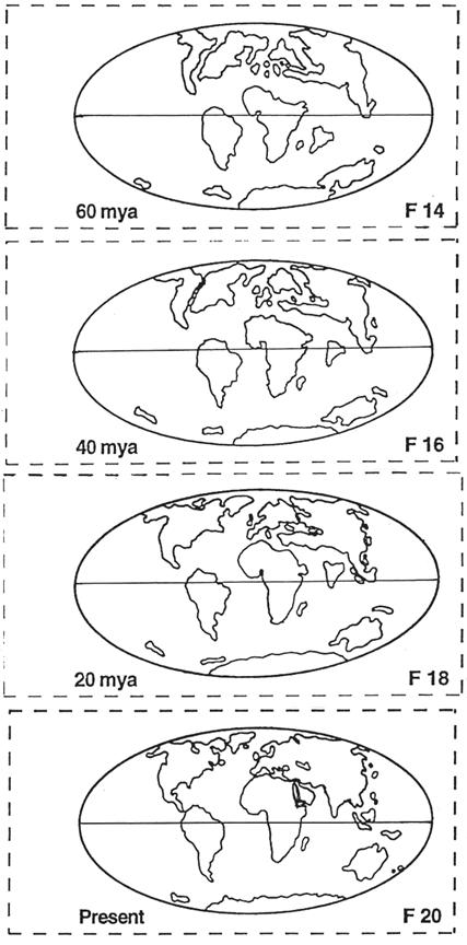 Selected Maps For Measuring The Positions Of Continental Regions Through Time Horizontal Line Center Map Is Equator
